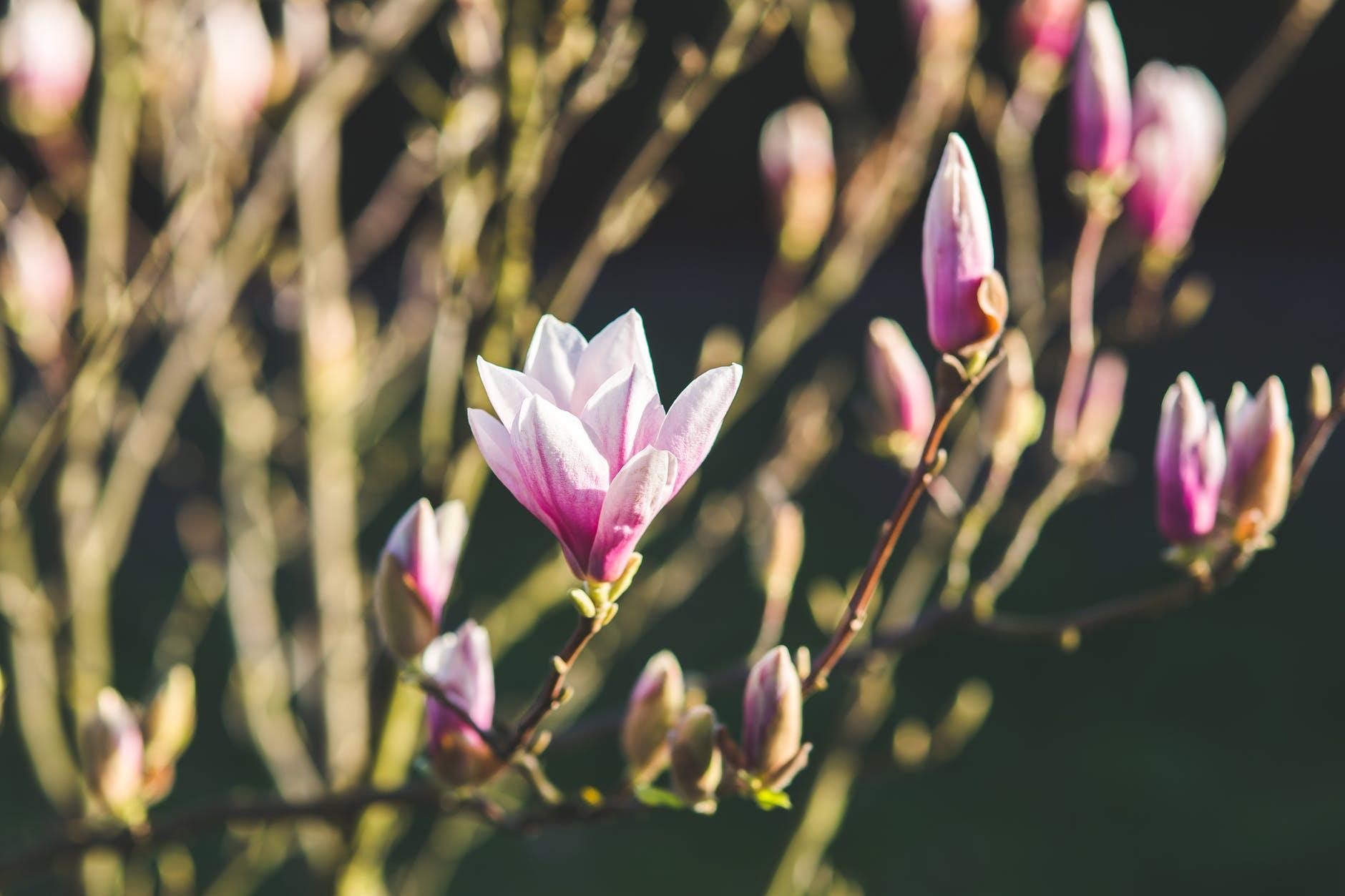 nature-flowers-plant-spring.jpg